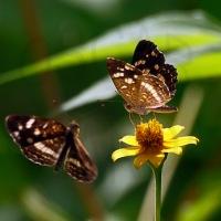 Fotografiando la naturaleza