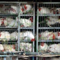 La crueldad hacia los animales en nuestra sociedad: una costumbre brutal