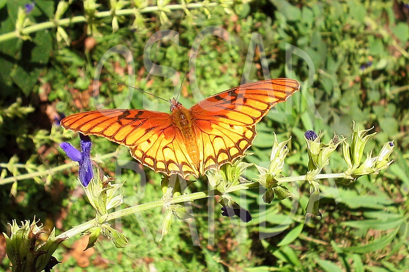 Un caleidoscopio de colores: Las Mariposas – Relatos de la