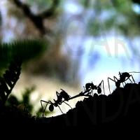 Las hormigas, una sociedad modelo