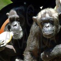 Mi primer día con los primates