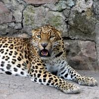 El Jaguar: Rey sin corona