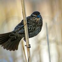 La mejor actividad del mundo: Observar Aves