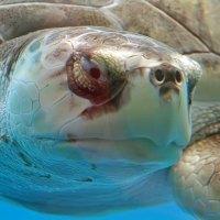 La importancia de las Tortugas Marinas