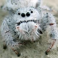 ¡Justicia para las Arañas!