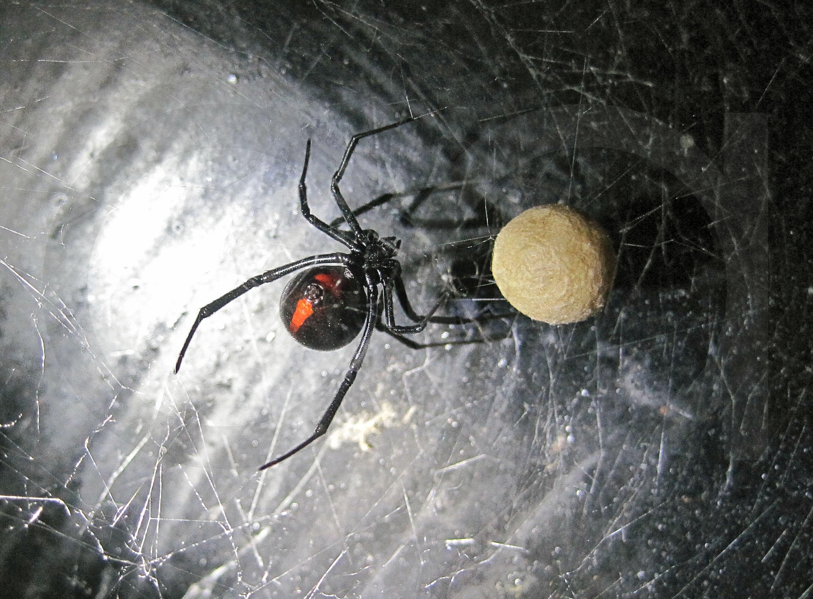 el valor de las arañas – Relatos de la Naturaleza
