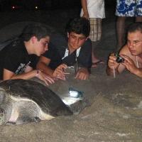 Consejos para disfrutar responsablemente de las tortugas marinas