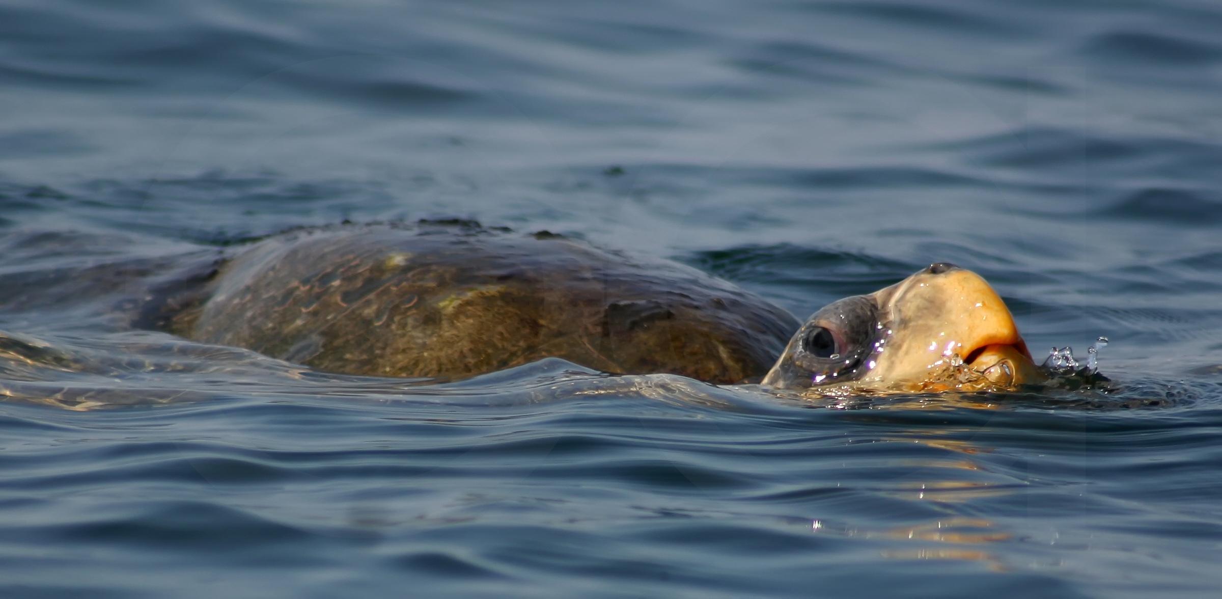 Mi Vida Con Las Tortugas Marinas Relatos De La Naturaleza