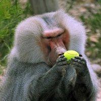 ¿Son los Zoológicos Necesarios?