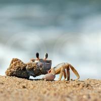 Pensando en la inmortalidad del Cangrejo