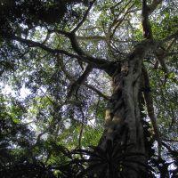 Los árboles, seres mágicos y espirituales