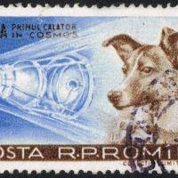 Héroes (animales) astronautas